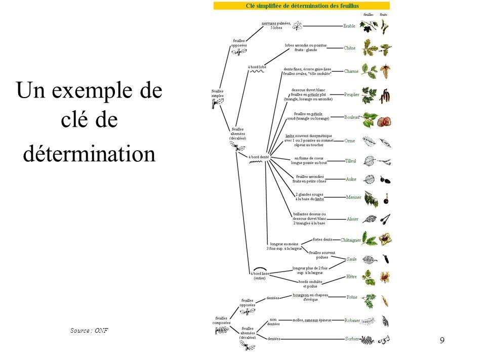 40 chlorobiontes (plantes vertes) embryophytes La lignée verte AngiospermesConifères Filicophytes (fougères) Bryophytes (mousses) Ulvophytes (algues vertes) Rhodophytes (algues rouges) chlorophylles a et b chloroplaste (endosymbiose) sporophyte + gamétophyte avec éléments conducteurs vaisseaux graine fleur trachéophytes spermaphytes