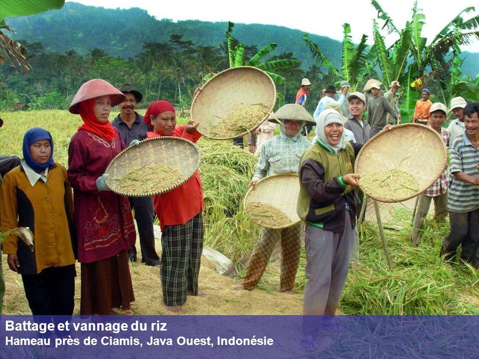 Battage et vannage du riz Hameau près de Ciamis, Java Ouest, Indonésie