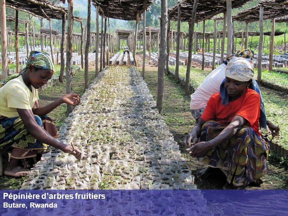 Pépinière darbres fruitiers Butare, Rwanda