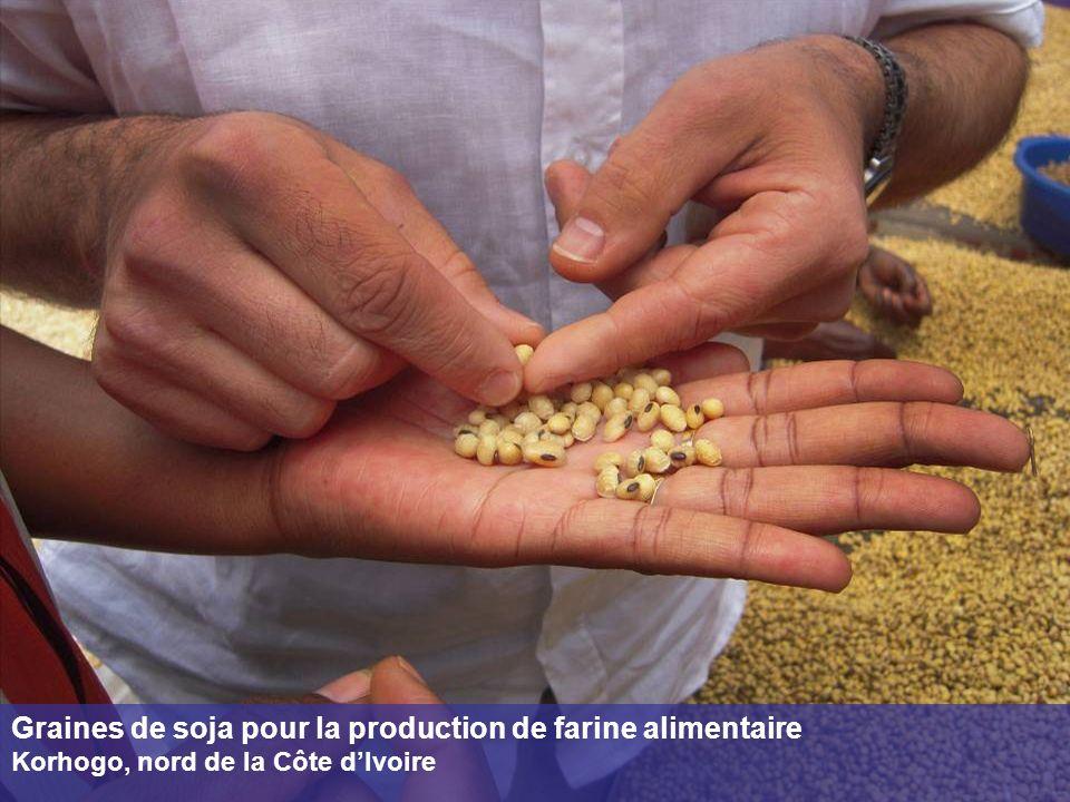 Graines de soja pour la production de farine alimentaire Korhogo, nord de la Côte dIvoire