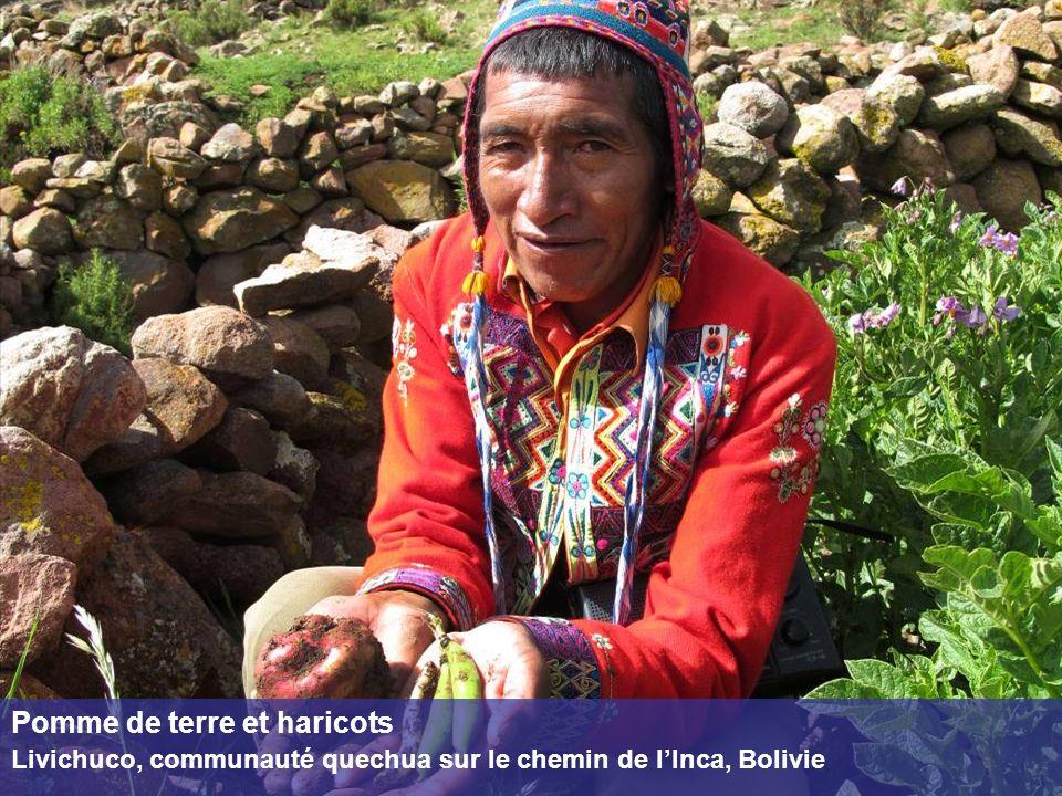Pomme de terre et haricots Livichuco, communauté quechua sur le chemin de lInca, Bolivie