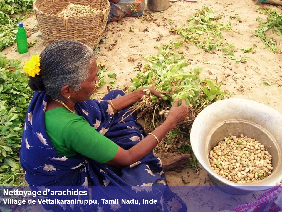 Nettoyage darachides Village de Vettaikaraniruppu, Tamil Nadu, Inde