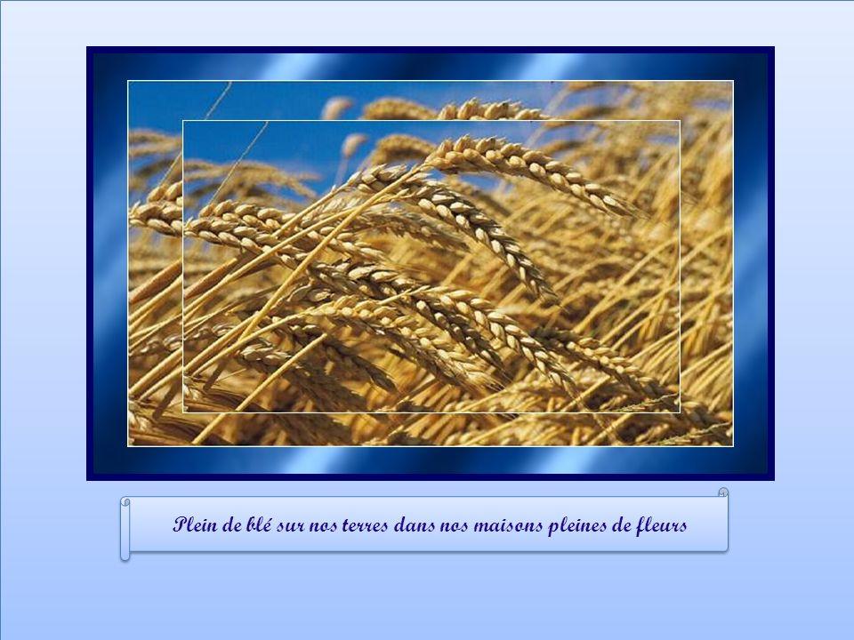 Plein de blé sur nos terres dans nos maisons pleines de fleurs