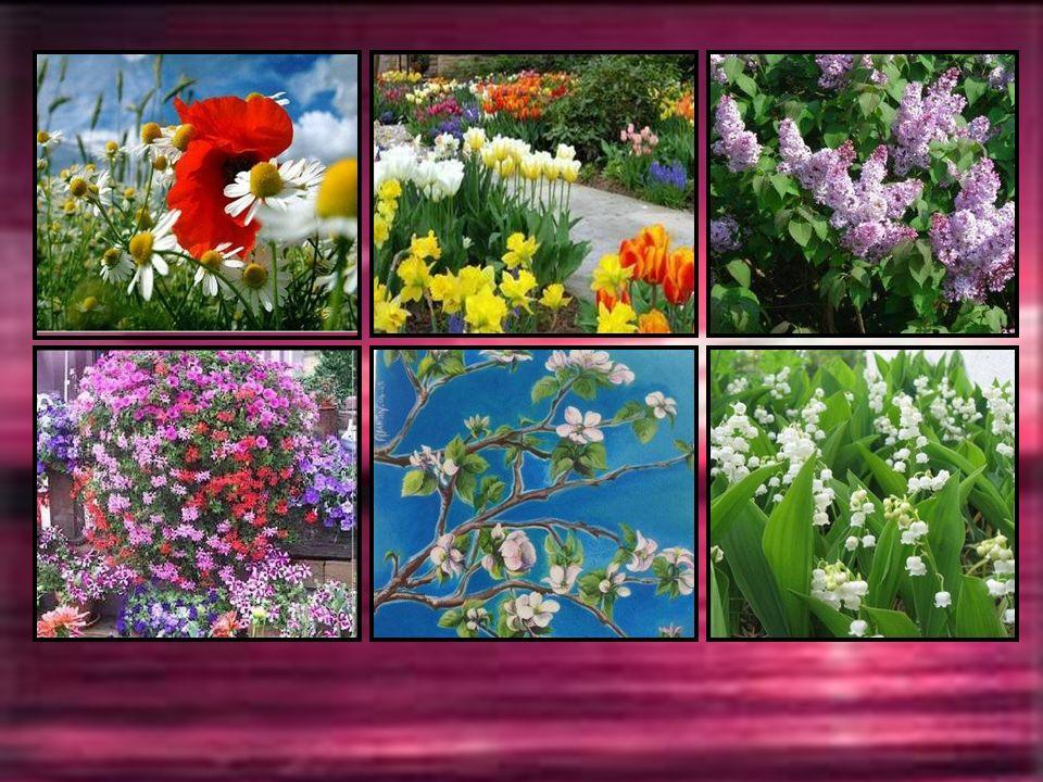 MAI La douceur de Mai fait chanter la beauté des fleurs qui s épanouissent frêles comme des papillons