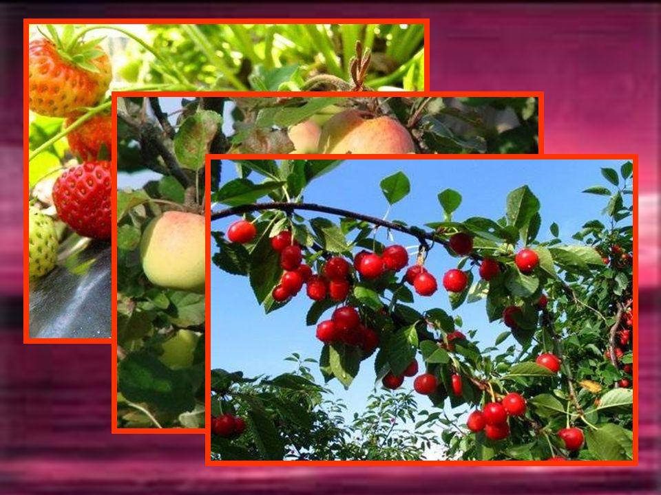SEPTEMBRE Gorgés de sève et de soleil, les arbres nous font le don de leurs fruits colorés et charnus