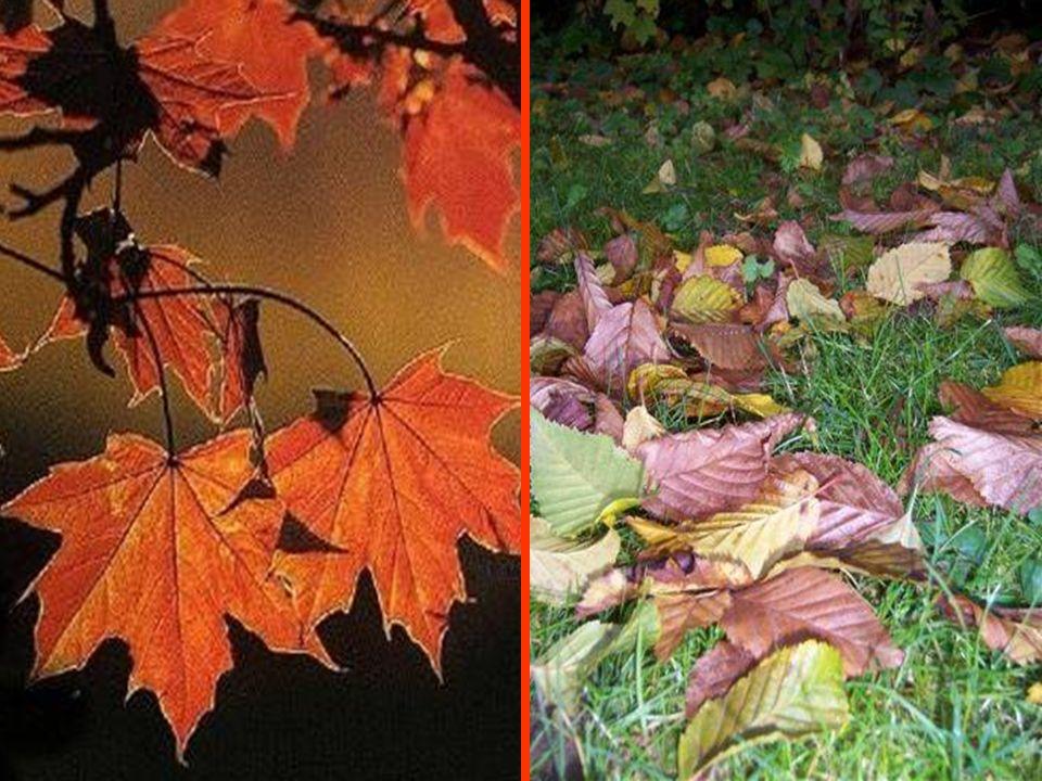 OCTOBRE Avant le long sommeil de lhiver, la nature nous offre le merveilleux spectacle de ses flamboyantes couleurs