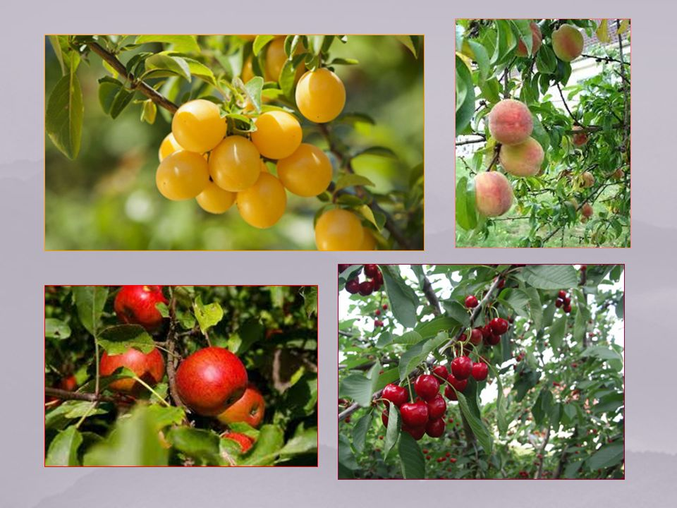 Alors les fleurs paraissent, les arbres fruitiers et les fleurs sépanouissent, lherbe et le blé poussent.