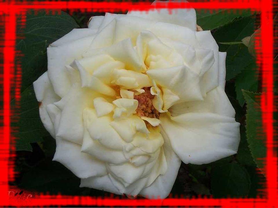 Quand le froid durcira la terre de ce jardin déjà fané, nayons pas de chanson austère devant sa fragile beauté!