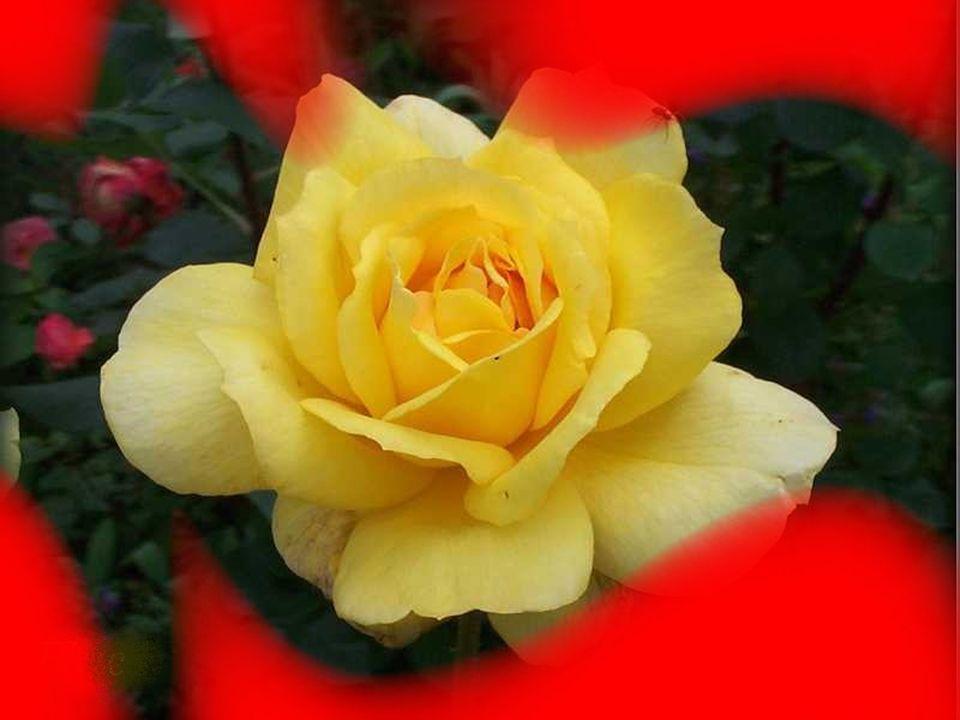 La mort nest pas la fin des choses pour qui croit en la vie des temps. Lhiver nest pas la fin des roses pour qui crois toujours au printemps.