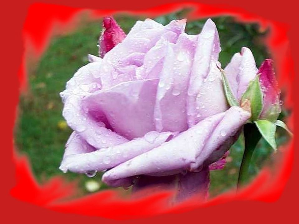 Il vaut bien quon se les rappelle pour mieux voir clair en notre amour. si ces fleurs, vois-tu, sont si belles Cest à bien traverser les jours.
