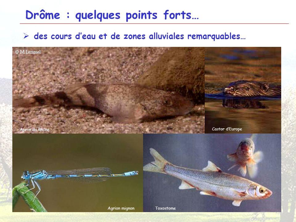 10 Drôme : quelques points forts… des cours deau et de zones alluviales remarquables… Epipactis du Rhône Petite MassetteSamole de Valerand Orchis à lo