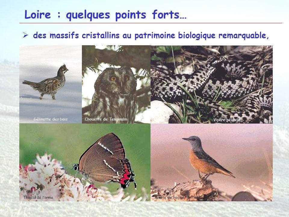 14 Loire : quelques points forts… des massifs cristallins au patrimoine biologique remarquable, Hautes chaumes du Forez Pilat Monts de la MadeleineAnd