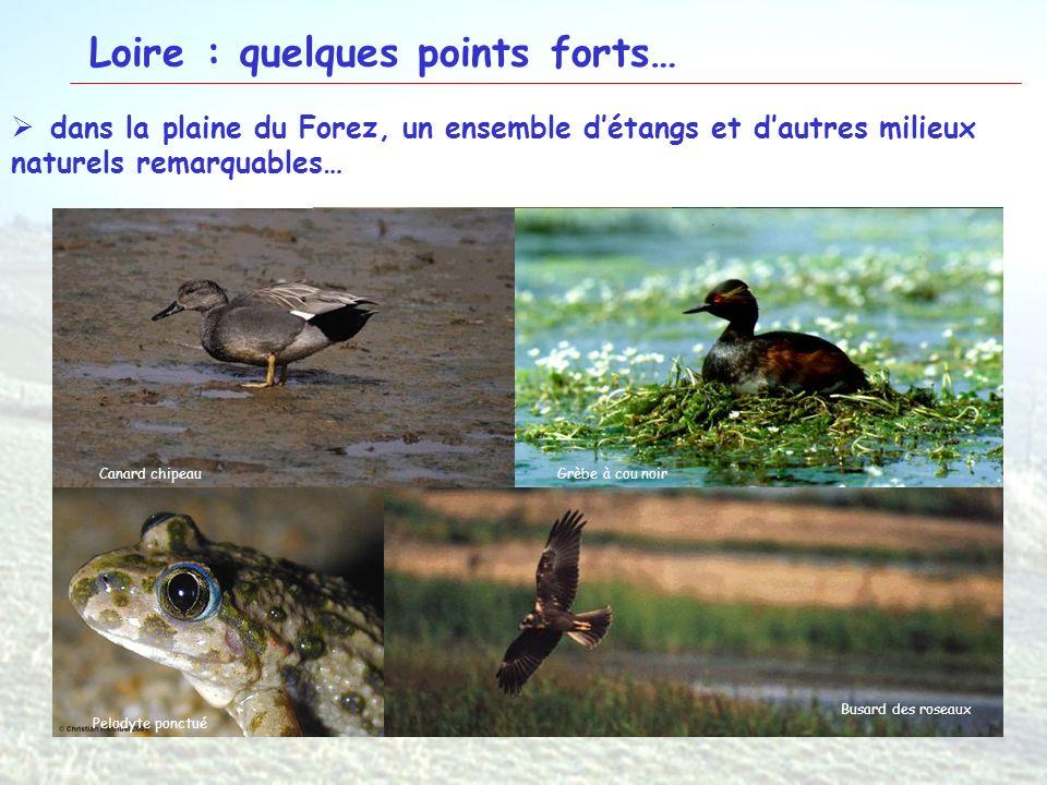 15 Loire : quelques points forts… dans la plaine du Forez, un ensemble détangs et dautres milieux naturels remarquables… Etang de la RonzeEcopôle du F