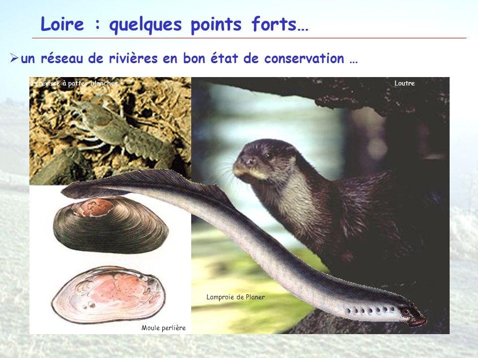16 Loire : quelques points forts… un réseau de rivières en bon état de conservation … Ecrevisse à pattes blanchesLoutre Moule perlière Lamproie de Pla