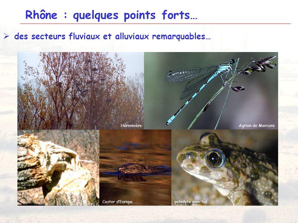 18 Rhône aval Ile du BeurreMiribelHottonie des marais Gratiole officinale Inule des fleuvesEpipactis du castor HéronnièreAgrion de Mercure Castor dEur