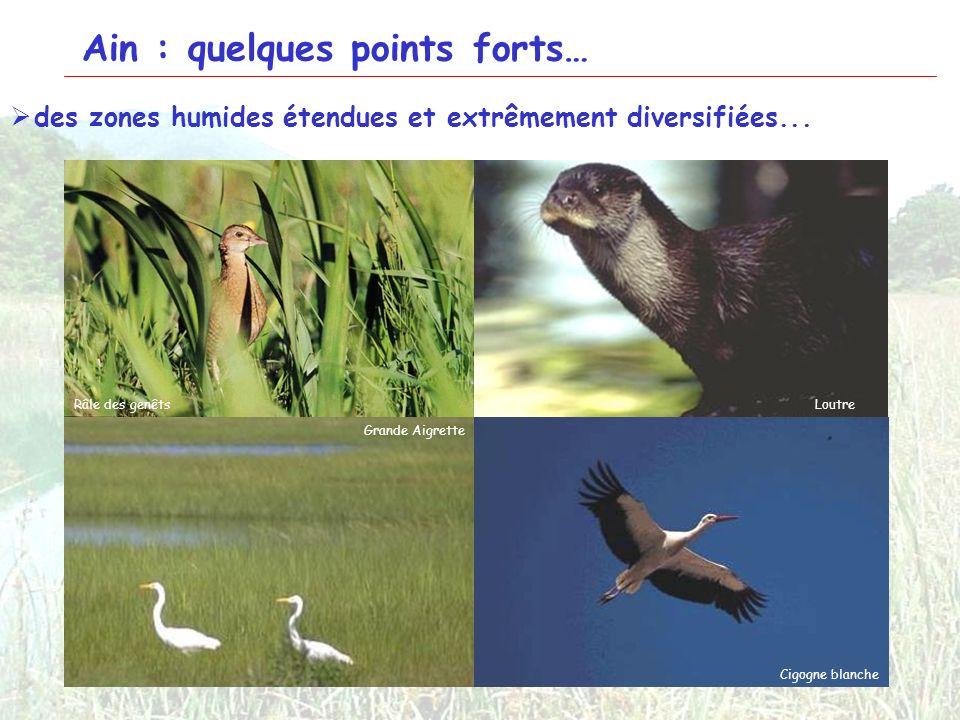 2 Ain : quelques points forts… des zones humides étendues et extrêmement diversifiées... Tourbière de CerinÉtangs de la Dombes Lac de SylansLe SéranLE
