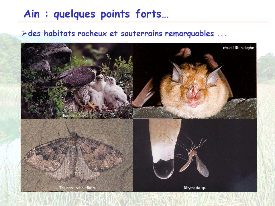 3 Ain : quelques points forts… des habitats rocheux et souterrains remarquables... Falaises du Pont des Pierres Grotte du Bugey Cours du Séran Falaise