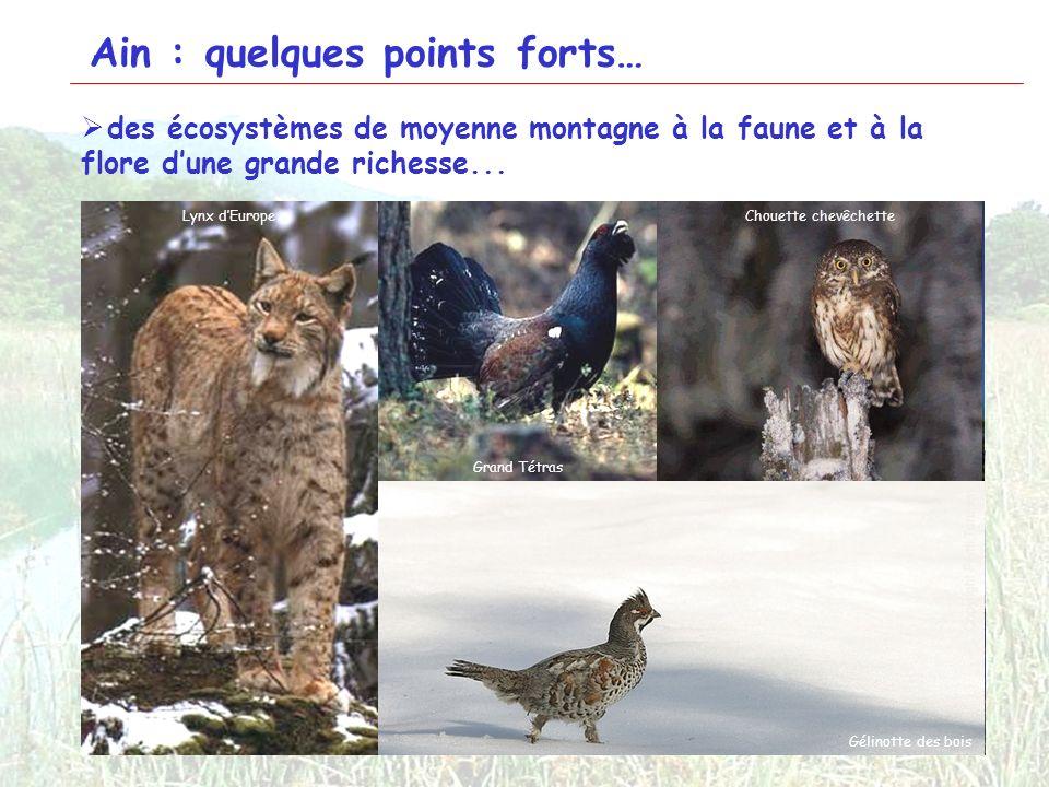 4 Ain : quelques points forts… des écosystèmes de moyenne montagne à la faune et à la flore dune grande richesse... Tourbière de Cerin Combe dOrvaz Cr