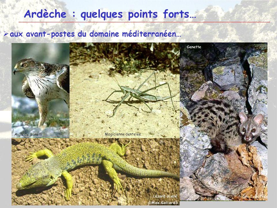 5 Ardèche : quelques points forts… aux avant-postes du domaine méditerranéen… TanargueBasse Ardèche Montagne de Crussol Tulipe précoce Iris nain Eupho