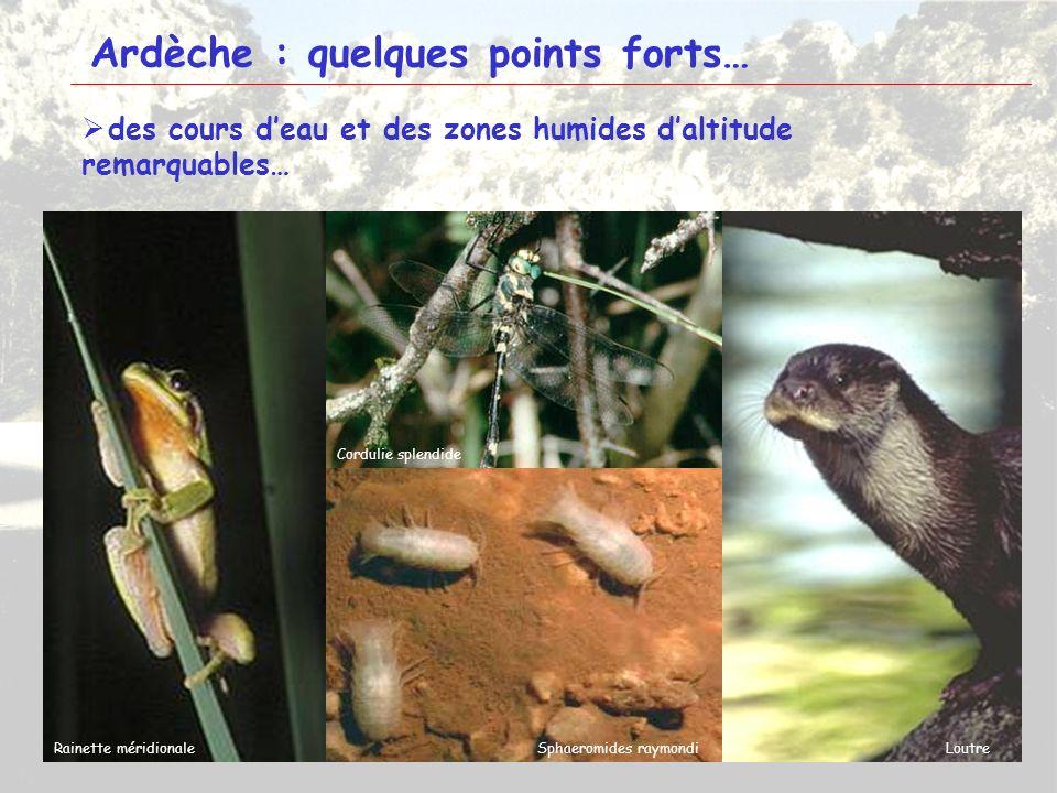 7 Ardèche : quelques points forts… des cours deau et des zones humides daltitude remarquables… Ligulaire de Sibérie Pédiculaire des marais Gentiane pn
