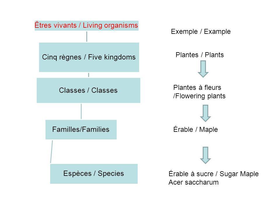 Êtres vivants / Living organisms Classes / Classes Familles/Families Espèces / Species Cinq règnes / Five kingdoms Exemple / Example Plantes / Plants