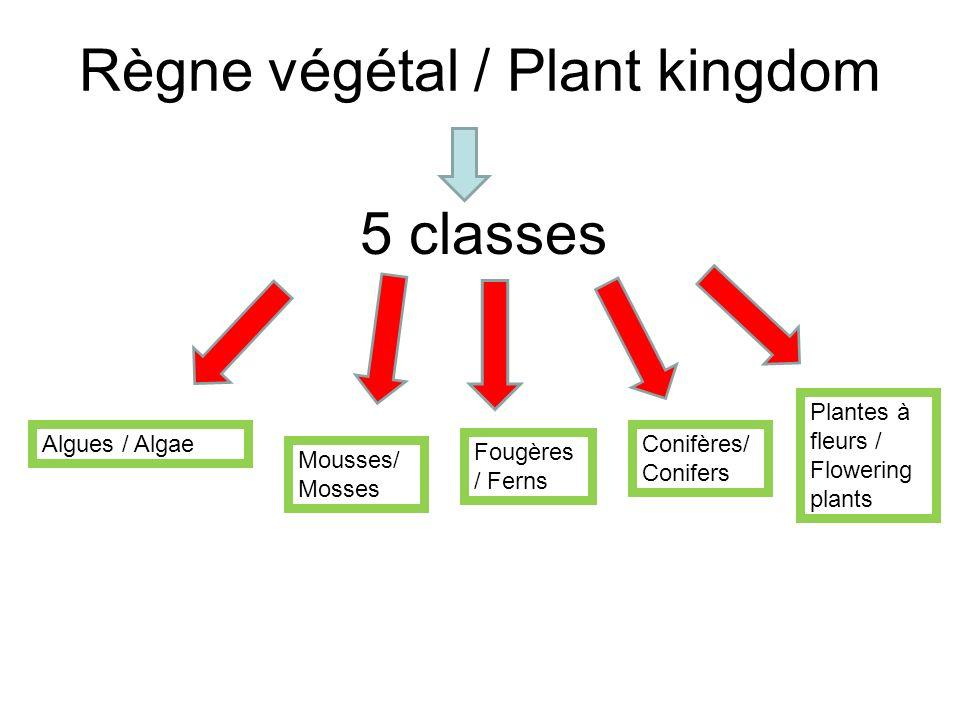 Règne végétal / Plant kingdom 5 classes Algues / Algae Mousses/ Mosses Fougères / Ferns Conifères/ Conifers Plantes à fleurs / Flowering plants