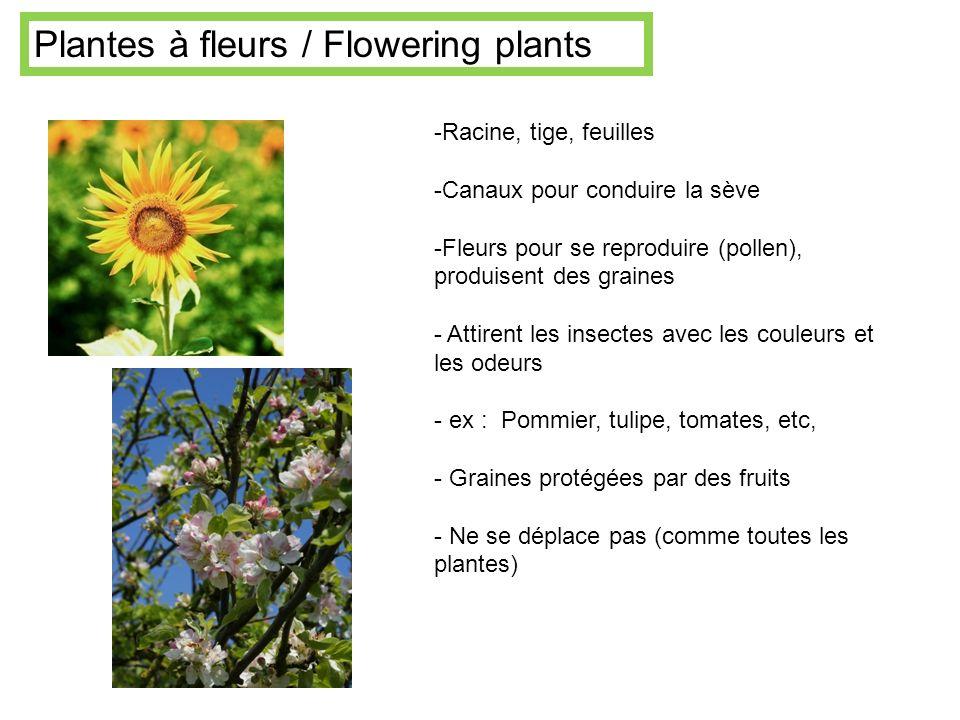 -Racine, tige, feuilles -Canaux pour conduire la sève -Fleurs pour se reproduire (pollen), produisent des graines - Attirent les insectes avec les cou
