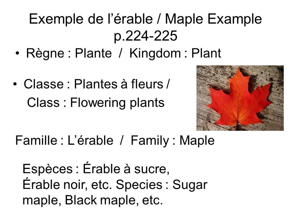 Exemple de lérable / Maple Example p.224-225 Règne : Plante / Kingdom : Plant Classe : Plantes à fleurs / Class : Flowering plants Famille : Lérable /