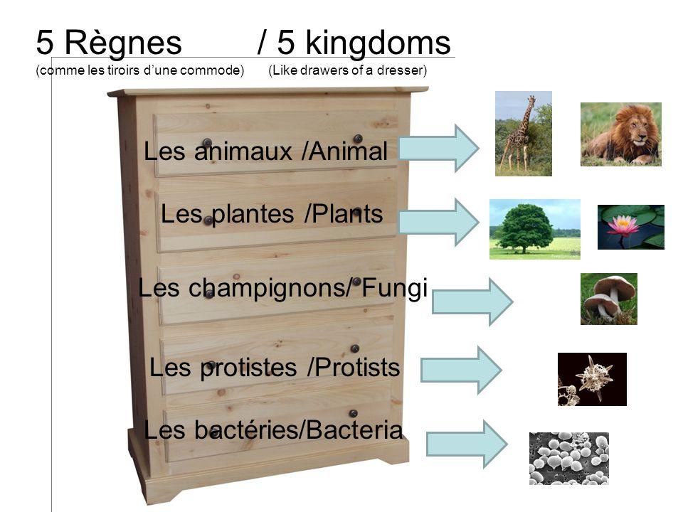 5 Règnes / 5 kingdoms (comme les tiroirs dune commode) (Like drawers of a dresser) Les animaux /Animal Les plantes /Plants Les champignons/ Fungi Les