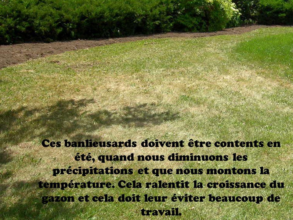 Ces banlieusards doivent être contents en été, quand nous diminuons les précipitations et que nous montons la température. Cela ralentit la croissance