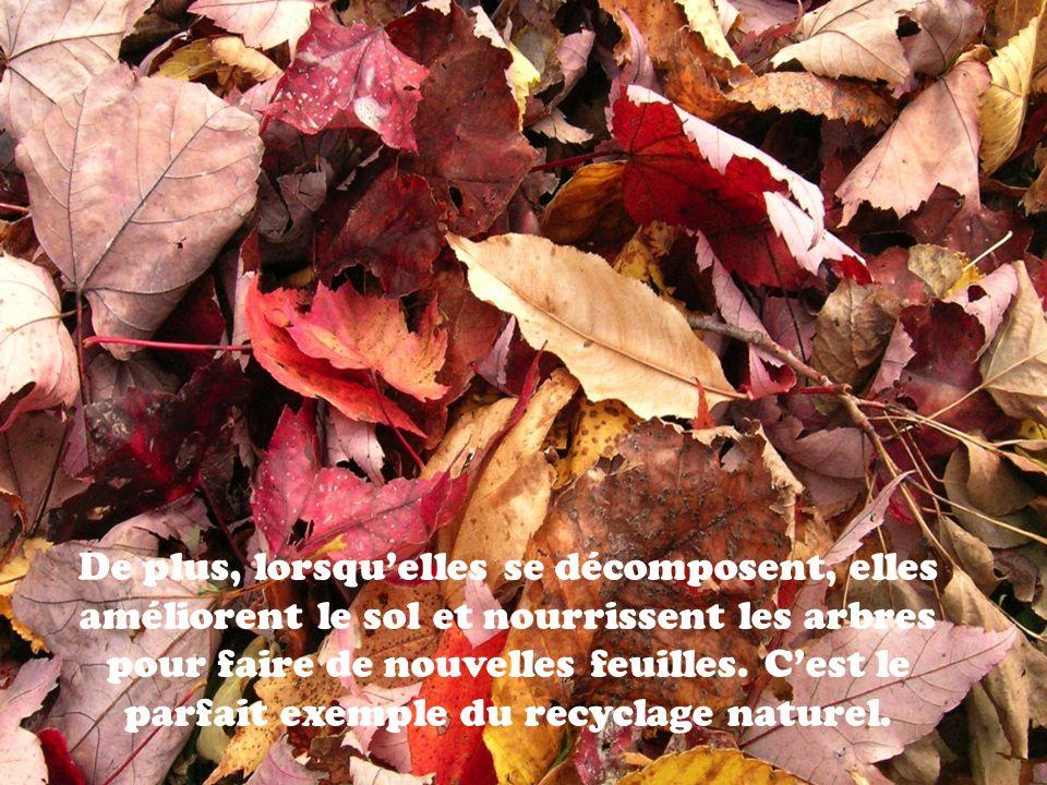 De plus, lorsquelles se décomposent, elles améliorent le sol et nourrissent les arbres pour faire de nouvelles feuilles. Cest le parfait exemple du re