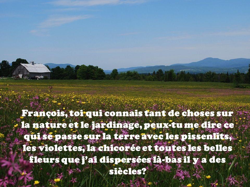 François, toi qui connais tant de choses sur la nature et le jardinage, peux-tu me dire ce qui se passe sur la terre avec les pissenlits, les violette