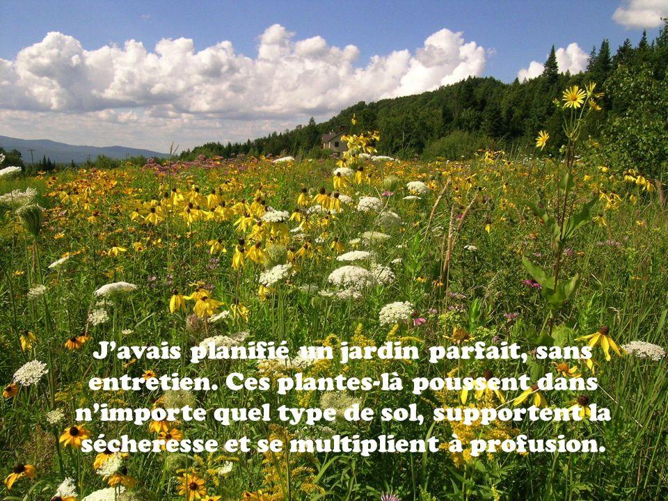 Javais planifié un jardin parfait, sans entretien. Ces plantes-là poussent dans nimporte quel type de sol, supportent la sécheresse et se multiplient