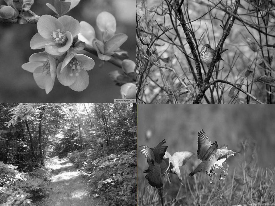 Avril, mois de la brise et des averses bienfaisantes, par la verdure Tu es attendu. Les bourgeons à fleurs, bien au chaud pour lhiver De leurs prisons