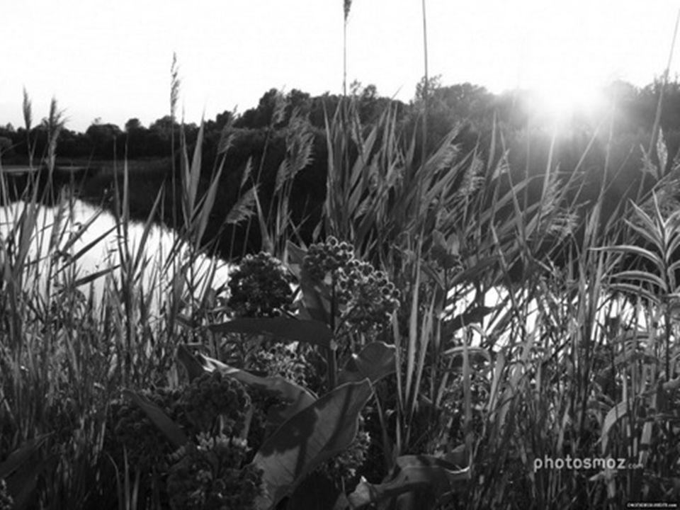 Un ruisseau gentiment suit son cours, un canard mandarin sy dandine. Le soir, niché dans larbre, il surplombe le monde, dans cette allée de charmilles