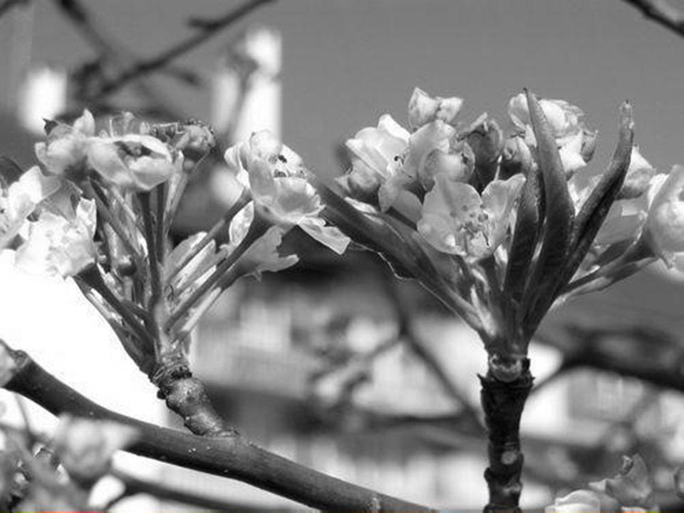 En ce mois nouveau, je vous glisse un poème, car voici la saison plus joyeuse, Des fleurs nouvelles percent déjà des bourgeons blancs, des bourgeons roses.