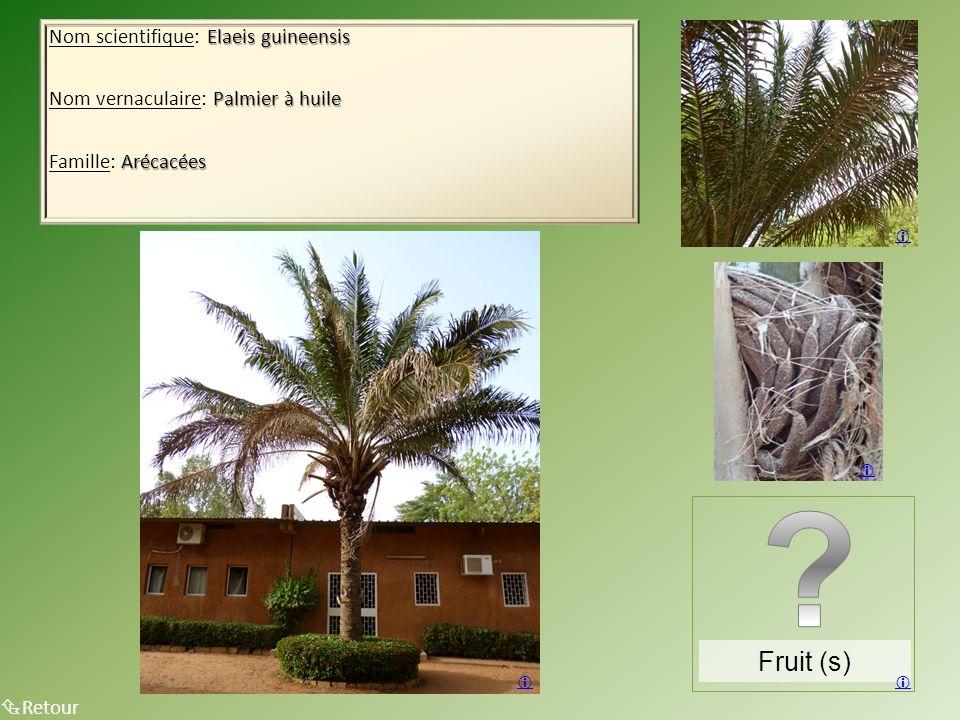 Elaeis guineensis Nom scientifique: Elaeis guineensis Palmier à huile Nom vernaculaire: Palmier à huile Arécacées Famille: Arécacées Retour Fruit (s)