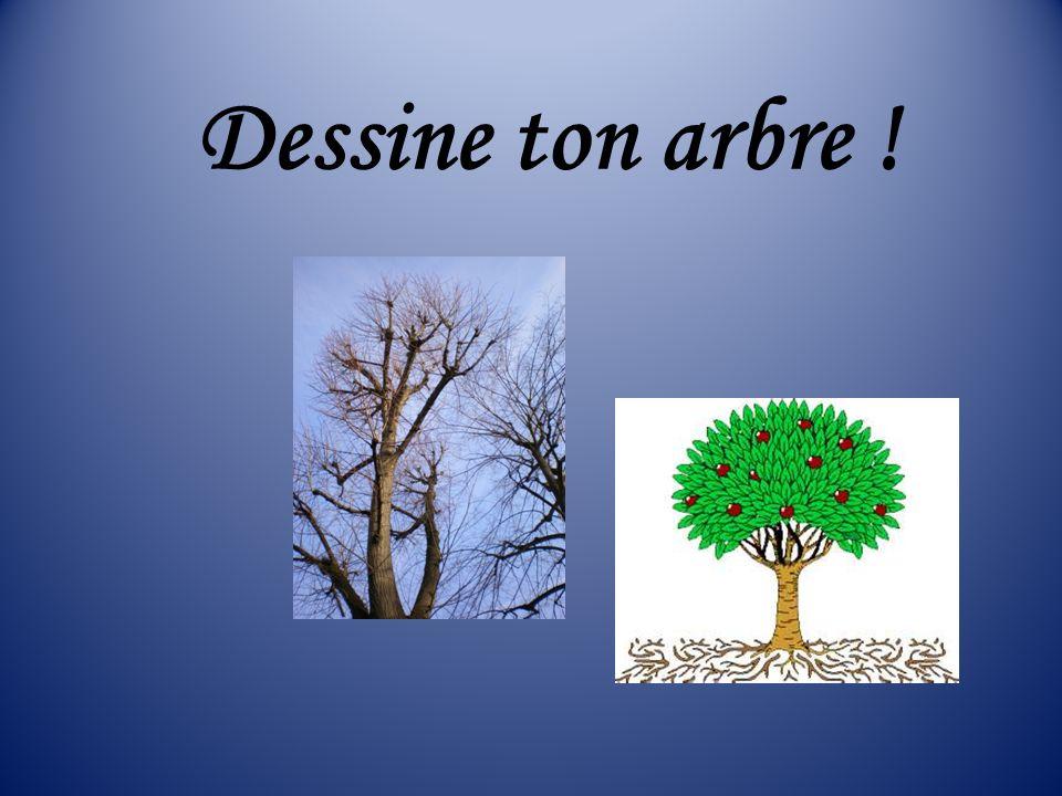Dessine ton arbre !