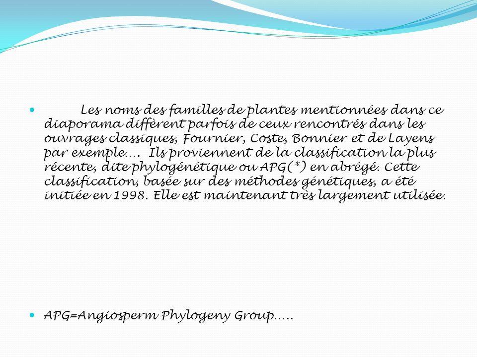 Les noms des familles de plantes mentionnées dans ce diaporama diffèrent parfois de ceux rencontrés dans les ouvrages classiques, Fournier, Coste, Bon