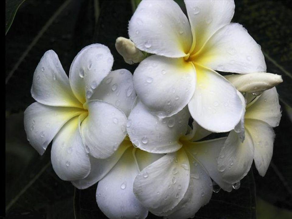 Après la pluie, les fleurs prennent vie! La lumière du soleil et une légère pluie de temps en temps garder fleurs heureux, croissance et frais. Fleurs