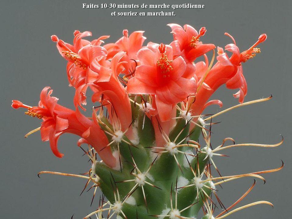 Petites astuces pour une vie meilleure en 2013 Cliquez et admirez les fleurs de cactées.