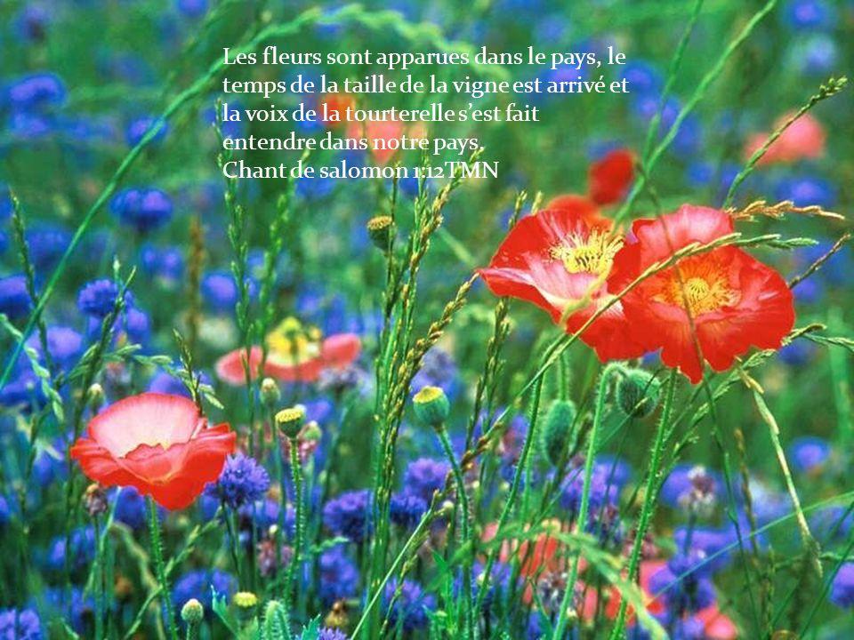 Les fleurs sont apparues dans le pays, le temps de la taille de la vigne est arrivé et la voix de la tourterelle sest fait entendre dans notre pays. C