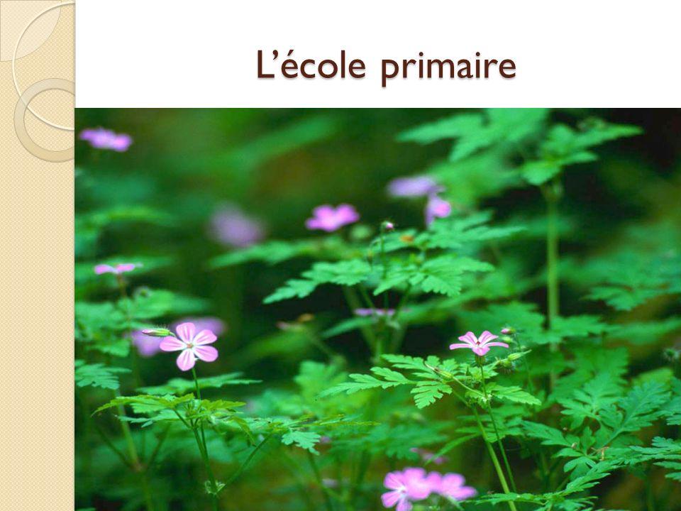Lécole primaire