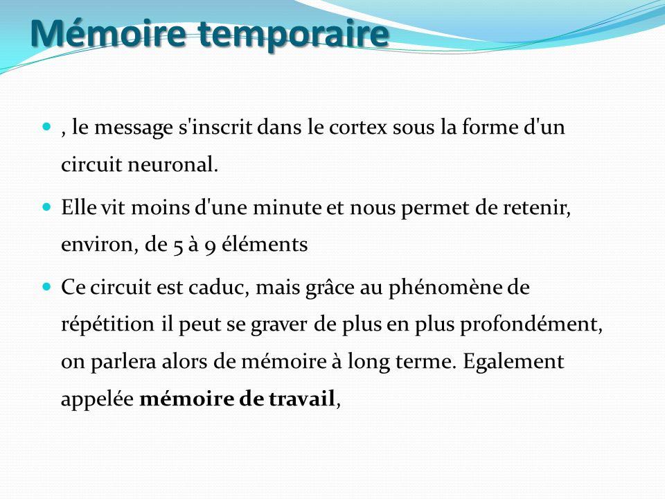 Mémoire temporaire, le message s'inscrit dans le cortex sous la forme d'un circuit neuronal. Elle vit moins d'une minute et nous permet de retenir, en