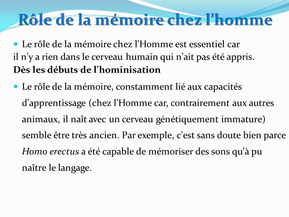 Le rôle de la mémoire chez l'Homme est essentiel car il n'y a rien dans le cerveau humain qui n'ait pas été appris. Dès les débuts de l'hominisation L