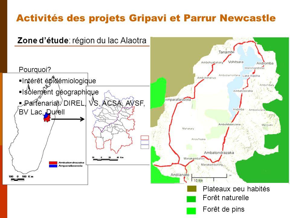 Zone détude: région du lac Alaotra Plateaux peu habités Forêt naturelle Forêt de pins Activités des projets Gripavi et Parrur Newcastle Pourquoi.