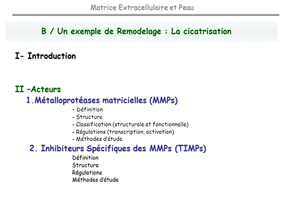 II –Acteurs 1.Métalloprotéases matricielles (MMPs) - - Définition - Structure - Classification (structurale et fonctionnelle) - Régulations (transcription, activation) - Méthodes détude 2.