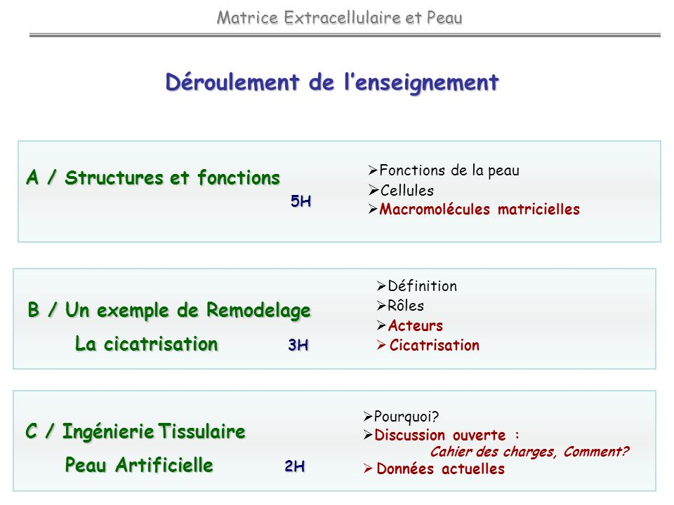 Matrice Extracellulaire et Peau Matrice Extracellulaire et Peau Déroulement de lenseignement B / Un exemple de Remodelage B / Un exemple de Remodelage