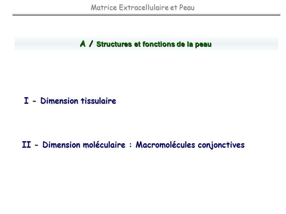 I - Dimension tissulaire Cellules Organisation stratifiée / fonctions Matrice Extracellulaire et Peau A / Structures et fonctions Kératinocyte : Barrière Physique Mélanocyte : Photoprotection Cellule de Langerhans : Immunoprotection Fibroblaste : - Croissance et Différenciation des Kératinocytes - Synthèse et Remodelage Matriciel Vaisseaux : Apport de Nutriments EPIDERME EPIDERME : Fonctions de Protection DERME DERME : Tissu de Soutien et Nourricier JONCTION DERMO EPIDERMIQUE