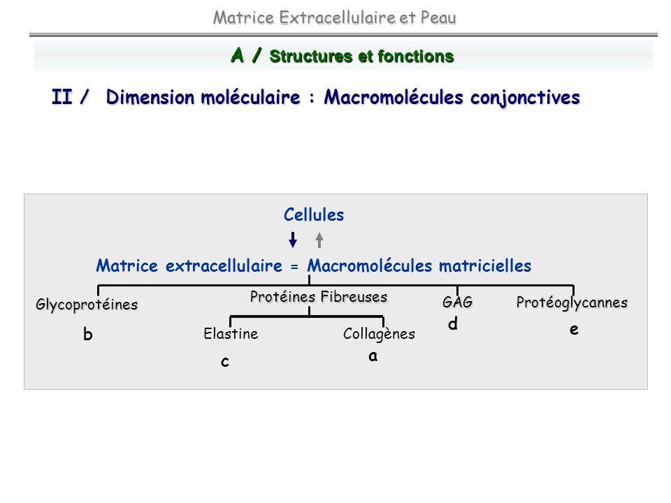 Cellules Matrice extracellulaire = Macromolécules matricielles Matrice Extracellulaire et Peau Protéines Fibreuses GAGProtéoglycannes Glycoprotéines E